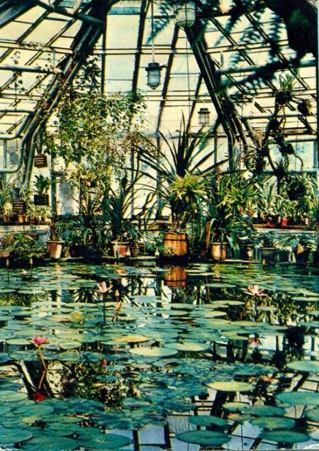 Оранжерея в ботаническом саду москва